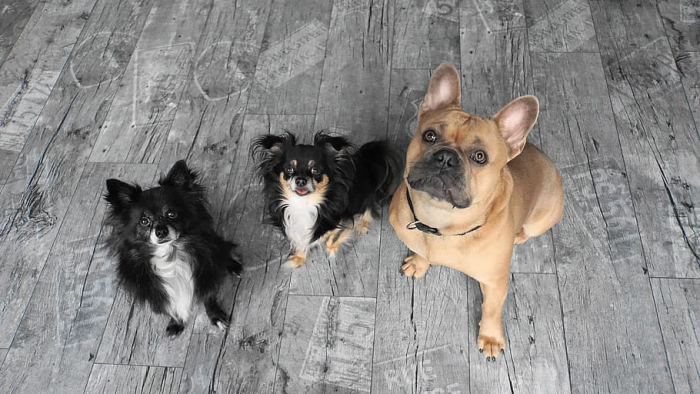 Spotify lanza nueva función que permite crear playlist para mascotas