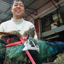 Coronavirus: por qué el brote del virus podría ser una bendición para los animales salvajes