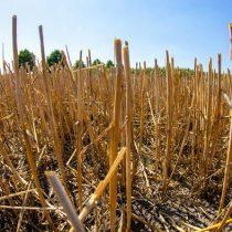 En busca de una nueva agricultura libre de pesticidas químicos