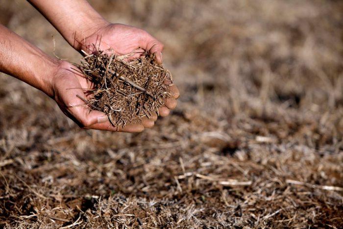 Escasez hídrica: decretan emergencia agrícola en 8 comunas de la Región de Ñuble