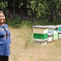 Buscan rescatar y conservar el patrimonio cultural de la apicultura pewenche