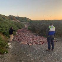 Seremi de Salud del Biobío investiga vertimiento de 14 toneladas de jibia en cerro de la comuna de Lebu