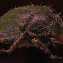 """Exhibición fotográfica dedicada a insectos """"Una mirada diferente"""" en Museo de Historia Natural de Valparaíso"""