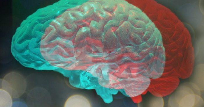 Con impresión 3D científicos estudiarán como la luz del día modifica la estructura del cerebro