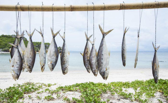 ¿Deberíamos dejar de comer pescado?