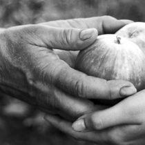 Estudio publicado en revista Nature Neuroscience indaga en las raíces biológicas de la generosidad
