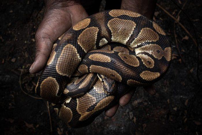 Informe revela el creciente tráfico de especies exóticas por internet