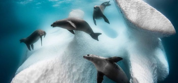 Fotógrafo Submarino del Año: las deslumbrantes imágenes tomadas para la competencia