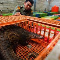 Conservacionistas aclaran panorama sobre los vínculos entre la vida silvestre y el coronavirus