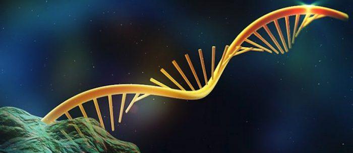 Científicos descubren elemento del genoma que sería clave en la respuesta inmunológica a las vacunas