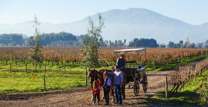Vendimias 2020: la gran fiesta del vino que invita a vivir el enoturismo de Chile