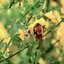 Seis razones (más) por las que el cuidado de la naturaleza debe priorizarse este año