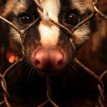 Preocupación internacional por el tráfico ilegal de fauna silvestre durante la pandemia