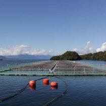 Organizaciones llaman a mantener límites a las concesiones salmoneras en las regiones de Los Lagos y Aysén