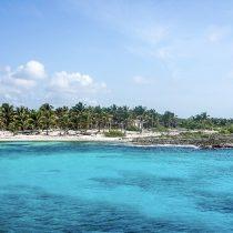 Avistan animales en riesgo de extinción en caribe mexicano vacío por coronavirus