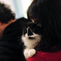 Mascotas y coronavirus: ¿pueden contagiarse?