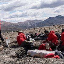 Duro reclamo de paleontólogos por exclusión de Ley del Patrimonio
