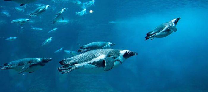 Doctor en acústica advierte urgencia de medir ruido subacuático para proteger fauna marina