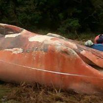 Yaktal, el documental que viajó al sur de Chile donde encontraron más de 300 ballenas muertas