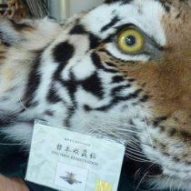 El riesgo que aún generan para la salud en China la cría y el consumo de animales silvestres