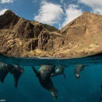 La protección de la biodiversidad ya no puede esperar