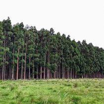 Consejo Superior de Investigaciones Científicas concluye que plantaciones forestales alteran el ciclo de nitrógeno en la costa chilena