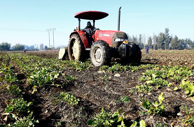 Indap presenta amplio paquete de medidas para apoyar a pequeños agricultores ante la propagación del COVID-19 y la sequía