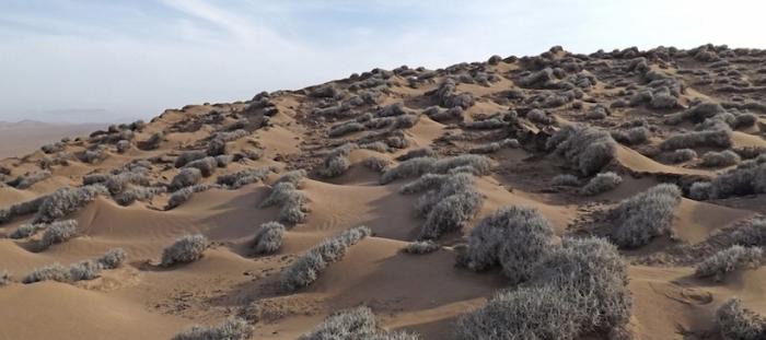 Hallazgo científico chileno-belga podría ayudar a plantar eficientemente en las sequías