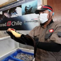 Programa Acuícola de Corfo apuesta por repoblar y cultivar el congrio colorado de cultivo