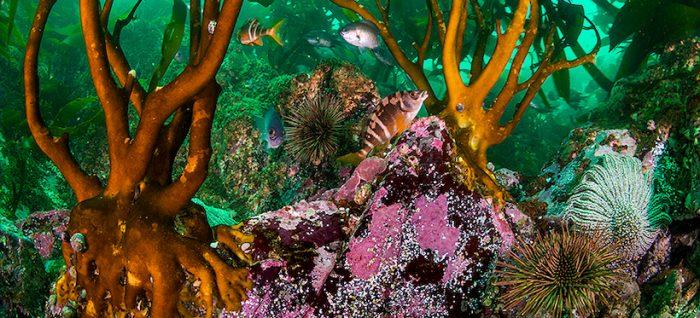 Liberan imágenes de uno de los lugares con mayor abundancia de vida marina de Chile