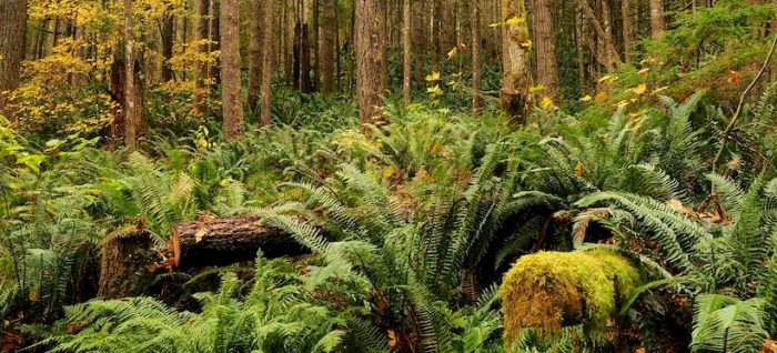 Ecólogos chilenos advierten que promover biodiversidad en el planetaes crucial para frenar nuevas pandemias