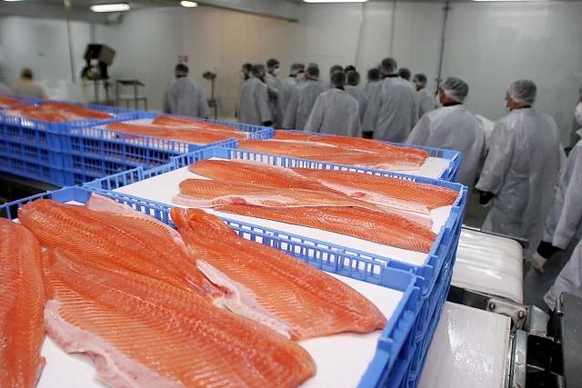Presentación de informe de industria del salmón de INDH
