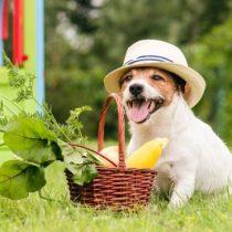 Por qué es mala idea alimentar a los gatos y perros con una dieta vegana