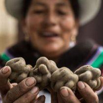 El increíble viaje de la papa andina, el tubérculo que transformó el mundo