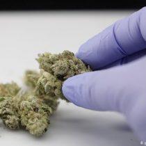 ¿Puede proteger el cannabis contra el coronavirus?