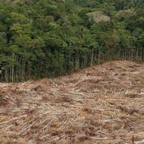 FAO: los bosques siguen desapareciendo, aunque más lentamente