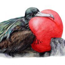 Publican libro que investigó sobre las 40 especies de aves de Rapa Nui