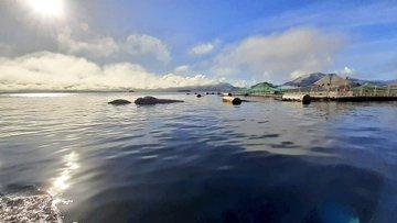 Sernapesca denunció el hallazgo de ballena muerta en centro de cultivo de la Región de Aysén
