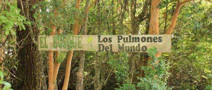 La importancia de incluir otros saberes indígenas y rurales en el manejo de ecosistemas chilenos