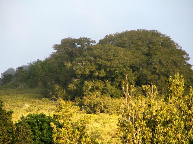 Bosques templados concentran gran diversidad  evolutiva y científicos promueven su protección