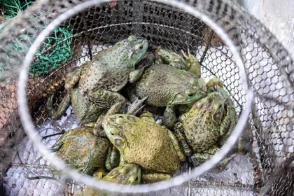 China busca erradicar el tráfico de animales salvajes tras Covid-19