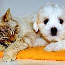 Recomiendan que afectados de Covid-19 dejen a sus mascotas con otras personas