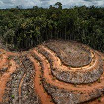 Deforestación, COVID19 y futuras pandemias