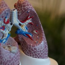 Las diferentes vías de infección del coronavirus: ¿más allá del sistema respiratorio?