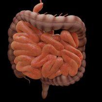 Neurociencia: Eje cerebro-intestino podría ser la clave para determinar origen de la enfermedad de Parkinson