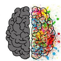 Neurociencias: reorganización neural, un cerebro incompleto se reordena