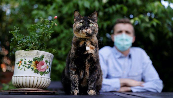 Una gata sobrevive a infección de coronavirus en Paris