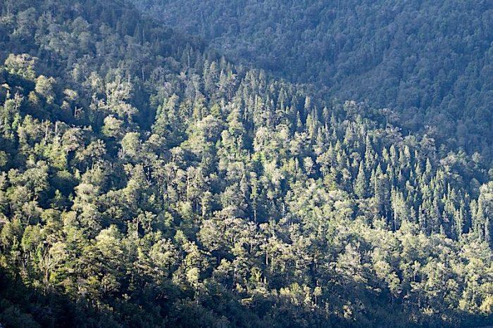 Diez mitos sobre los bosques que lastran el futuro del planeta
