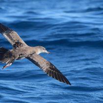 Aprueban tres nuevos planes para proteger especies clasificadas en peligro