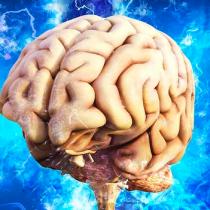 Neurociencias | Capacidad de renovar neuronas se mantiene en la enfermedad de Alzheimer, y en ella podría estar la esperanza de los pacientes